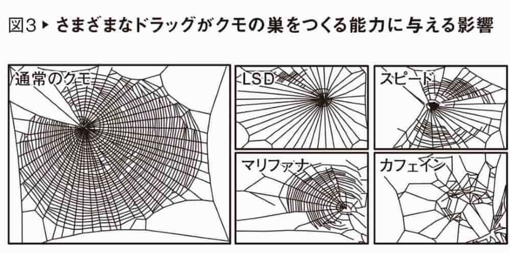 spider net experiment with drugs and caffeine
